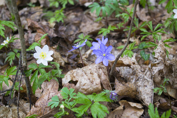 first spring flowers
