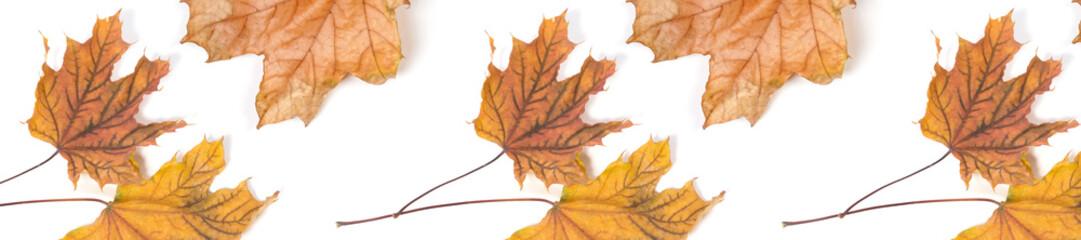 panorama header  pattern  repeat maple leaf autumn