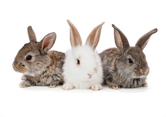Pets. Rabbit isolated on white background
