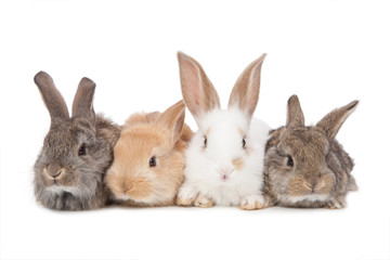 Pets. Four of the rabbit isolated on white background