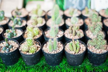 Soft focus Small Cactus pot
