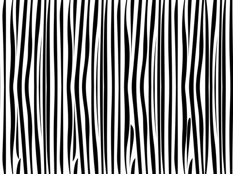 Zebra seamless pattern. Vector illustration.