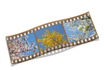 Frühling, Blüten, Filmstreifen, Collage