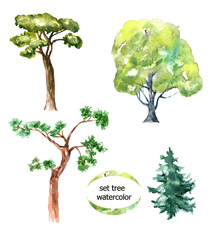 Tree set.  Watercolor drawing. Can be used for printing and design.