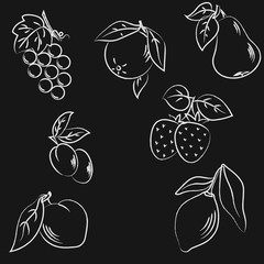 vector illustration Fruit on a black background