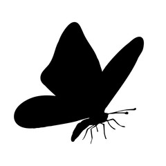 Vector silhouette of butterfly.