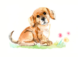 Puppy sitting. Watercolor hand drawn illustration