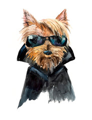 Dog in sunglasses. Yorkshire terrier. Cool guy, biker. Ridiculous puppy background, watercolor composition. Hand-drawing water color. Illustration.