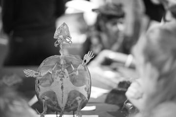 Skeleton of a small extinct reptile, amazing anatomy