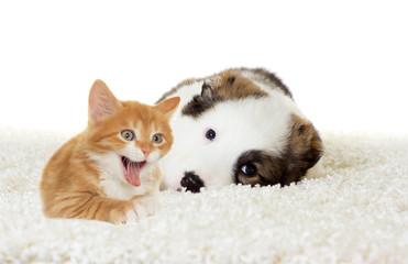 labrador puppy and kitten sleeping