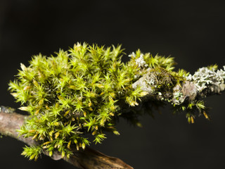 Green moss on bark macro with bokeh background, selective focus