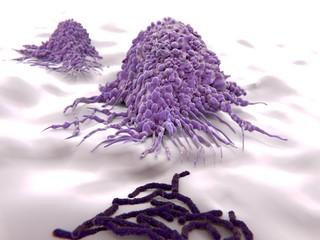 Makrophagen greifen Bakterien (Bazillen) an