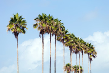 Palm Trees in a Row