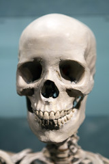 Scary Skeleton Skull