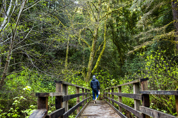Caucasian hiker walking on wooden bridge in forest