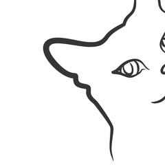 Sketch of domestic cat.
