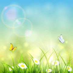 Grass and shinning sun