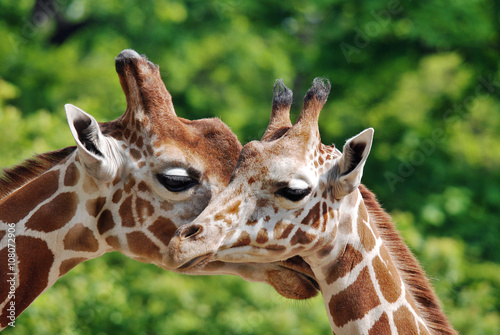 Mammals  Central Florida Zoo and Botanical Gardens