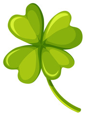 Shamrock leaf on white background