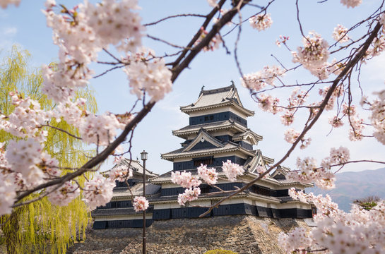 Matsumoto castle with spring cherry blossoms