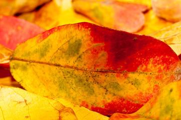 Hojas secas de otoño