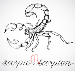 Hand drawn zodiac sign or Scorpio or Scorpion