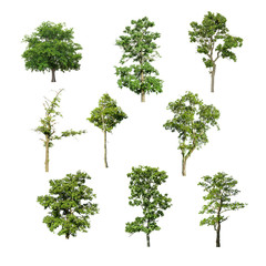 Tree image, Tree object, Tree JPG, Tree collection set isolated