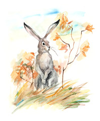 Hare. Autumn composition. Watercolor hand drawn illustration