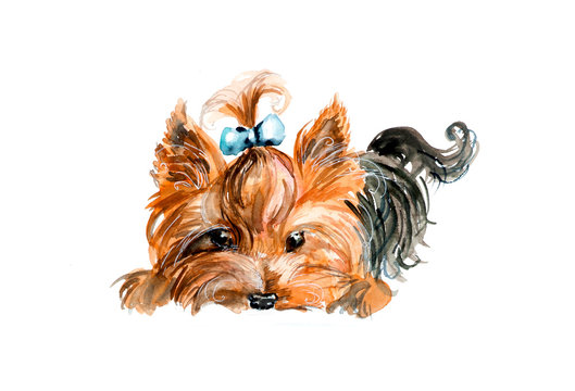 Yorkshire terrier. Blue bow and hair dress. Watercolor hand drawn illustration