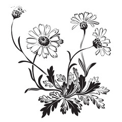 Hand drawn bouquet of chamomile flowers isolated on white background