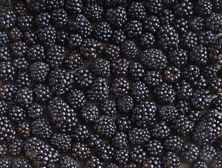 Blackberries background. Close up, top view, high resolution product. Harvest Concept