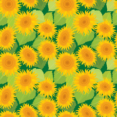 Seamless pattern with sunflowers. Summer season, nature backgrou