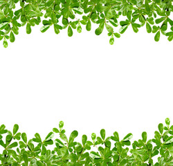 green leaf for background with copy space