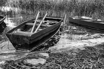 Rowing boats moored in reed by the lake.