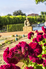 background landscape view of pink celosia flowers on a background of the fountains in the garden of the Alcazar of the Christian Kings in Cordoba, Spain
