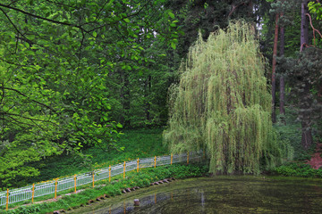 Willow on the bank of a pond