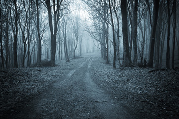 Papiers peints Forets dark forest road at night