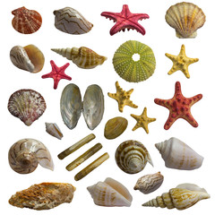 Seashell collage big pack