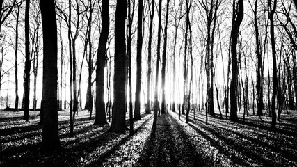 shadows of trees in spring forest