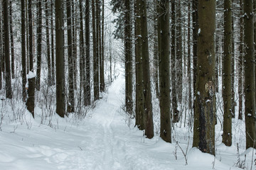 trail through the winter forest