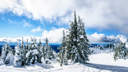 Wall Mural - Snow Covered Trees and deep snow pack in the High Alpine of the Shuswap Highlands of central British Columbia, Canada