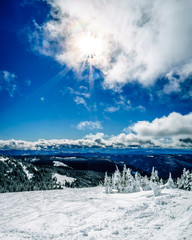 Wall Mural - Skiing among Snow Covered Trees under blue skies in the High Alpine of the Shuswap Highlands of central British Columbia, Canada