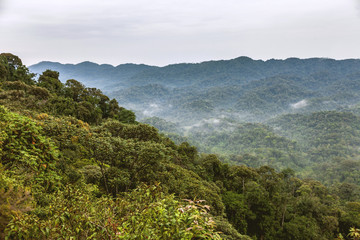The view of rainforests. It creates a fantastic view with foggy and cloudy sky.