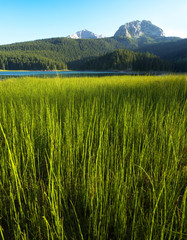 On the Bank of Crno Jezero, Durmitor, Monte Negro