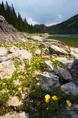 Mountain Lake with Yellow Flowers on Foreground