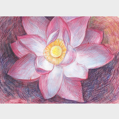Lotus flower. Drawing with colored pencils.Pale pink flower.