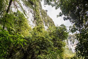 New Zealand Paparoa National Park tourist cave fox river