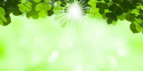 sonne im grünen laub - hintergrund