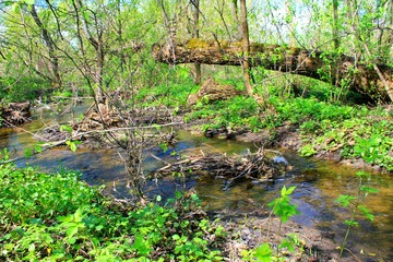 Small river on spring