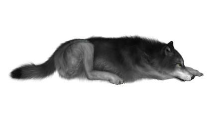 3D Illustration Gray Wolf on White